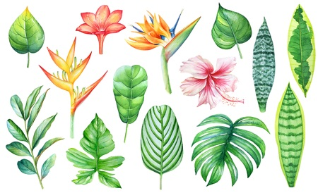 Watercolor collection of flowers isolated on white background.