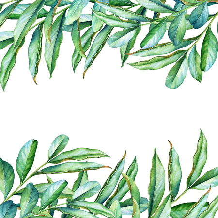 Natural design with watercolor green branches Stok Fotoğraf