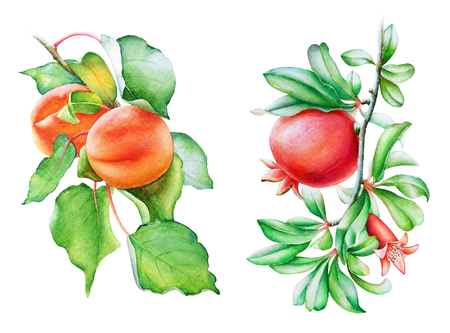 Peach and pomegranate tree branches