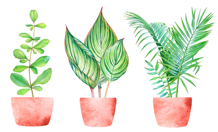 Collection of watercolor tropical green plants in red pots on white background Stok Fotoğraf