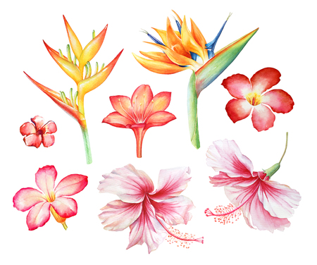 Watercolor collection of tropical flowers on white background.