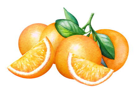 Watercolor composition with oranges on white background. Stok Fotoğraf