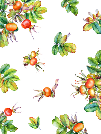 Watercolor background with Rose Hip branches