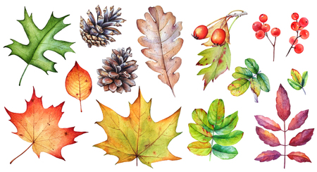 Watercolor collection of autumn leaves and berries