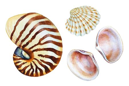 Collection of watercolor sea shells isolated on white background.