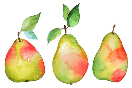 Watercolor hand drawn green yellow pears with red spots isolated on white background