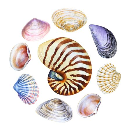 Collection of watercolor sea shells.
