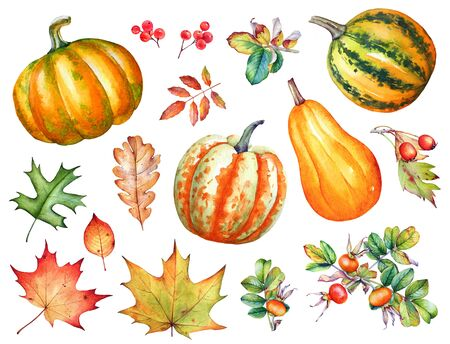 Collection of autumn leaves, berries and pumpkins.