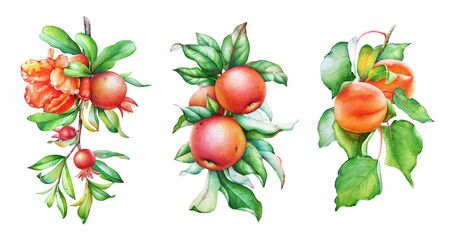 Realistic illustrations of pomegranate, apple and apricot tree branches.