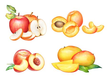 Watercolor apples, apricots, mangos and peaches.