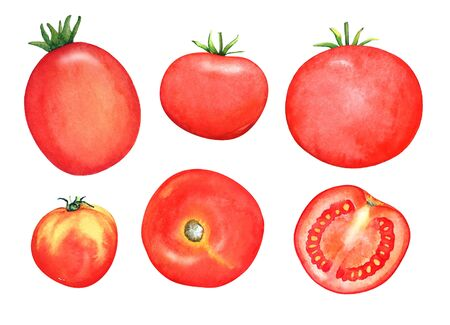 A collection of watercolor hand drawn tomatoes isolated on white background.