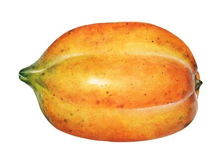 Watercolor illustration of papaya fruit isolated on white backgroound.