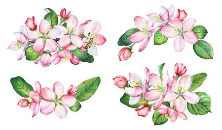 Watercolor apple tree branches with flowers and green leaves on white background. Imagens