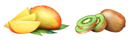 Watercolor hand drawn fruit collection. Kiwi and mango with slices isolated on white background Imagens