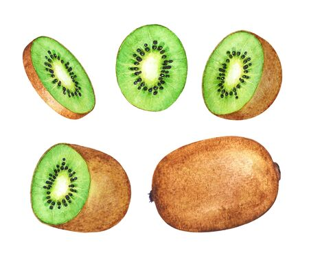 Watercolor kiwi fruit and its parts on white background