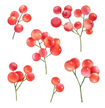 Collection of watercolor twigs with red berries