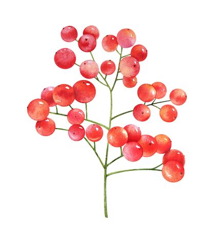 Watercolor illustrations of red berries on white background