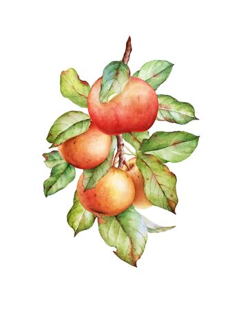 Watercolor apple tree branch with green leaves and apples