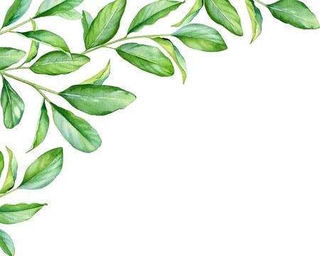 Floral design with watercolor branches with green leaves.