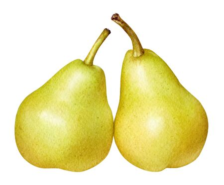 Watercolor illustration of yellow pears