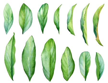 Collection of watercolor hand painted green leaves.