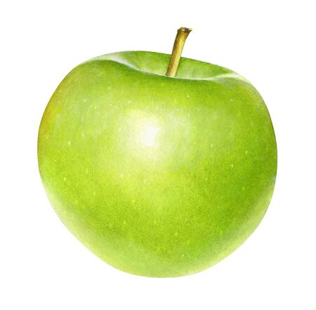 Watercolor realistic drawing of green apple