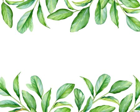 Watercolor frame with green leaves isolated on white background.