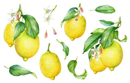 Collection of watercolor lemon tree branches, fruits, leaves and flowers.