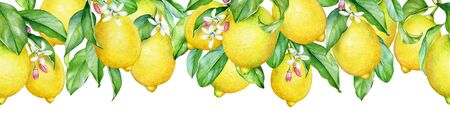 Seamless pattern with watercolor branches of lemon tree with ripe fruits and white flowers.