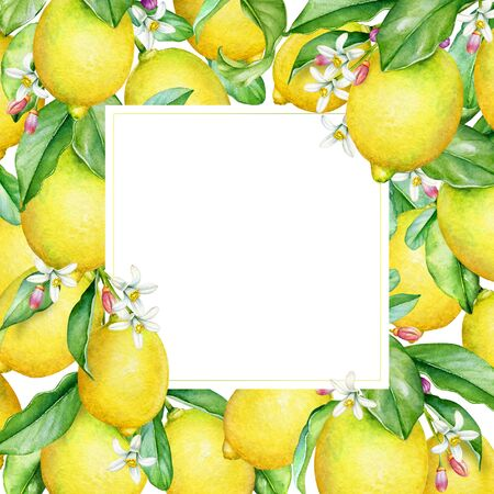 Frame with watercolor lemon tree branches with fruits, leaves and flowers. Standard-Bild