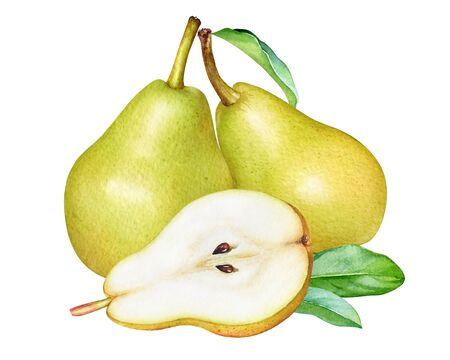 Watercolor yellow pears with leaves isolated on white background.