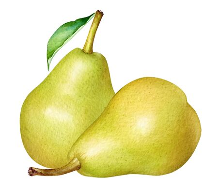Watercolor illustration of two yellow pears isolated on white background.