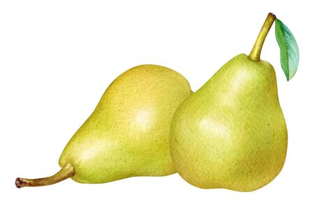 Watercolor illustration of yellow pears isolated on white background.