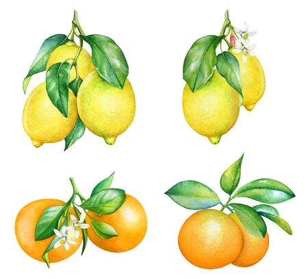 Collection of watercolor orange and lemon tree branches isolated on white background