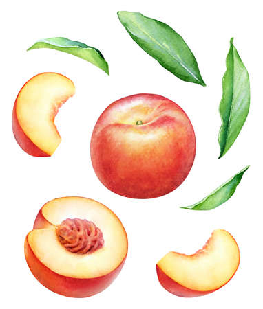 Watercolor illustration of peach fruits isolated on white background Standard-Bild