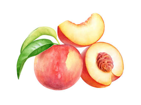 Watercolor illustration of peach fruit with slice and green leaves isolated on white background