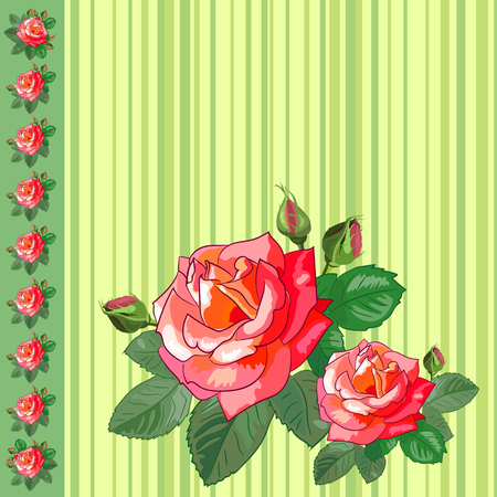 abstract rose: Floral vector illustration. Beautiful roses on a light green striped background. Greeting card with roses.