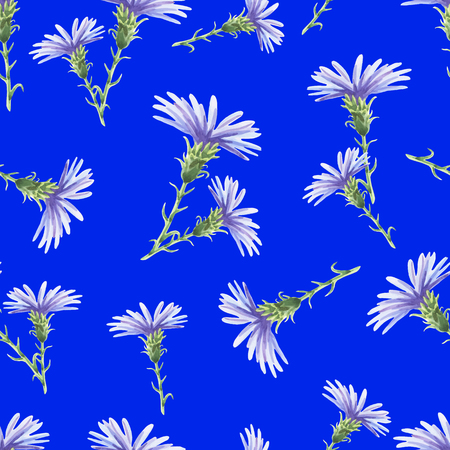 Chicory.Beautiful seamless pattern with delicate watercolor flowers on a blue. illustration.Can be used for gift wrapping paper,tissue,textiles. Ilustracja