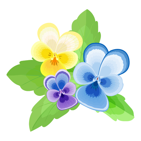 Pansy.Isolated stylized image of the flowers and leaves on a white background.Three flowers with petals of different colors.purple,yellow,blue.