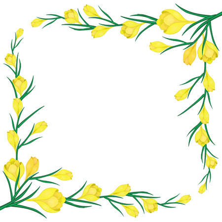 frame with yellow crocuses-01