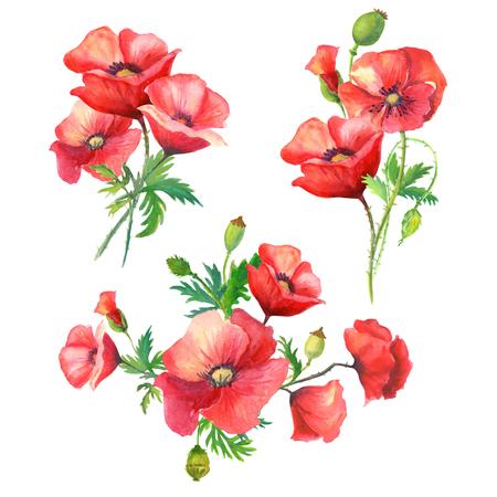 수채화 flowers.three 빨간 양 귀 비와 녹색 잎 3 아름 다운 밝은 꽃다발. 흰색 background.illustration에 고립 된 이미지