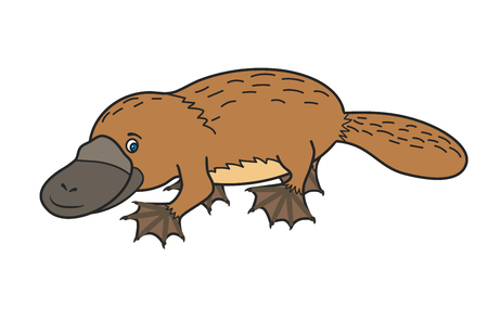 platypus: Funny platypus. Australian Illustration