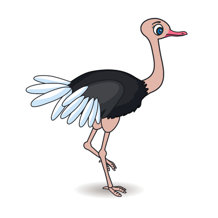 ostrich African bird Illustration