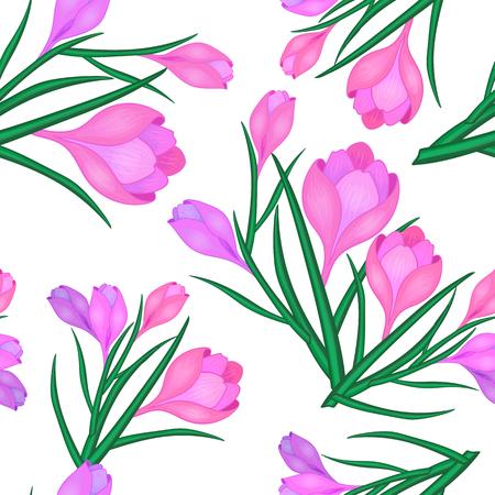 pink crocuses.The flowers of saffron