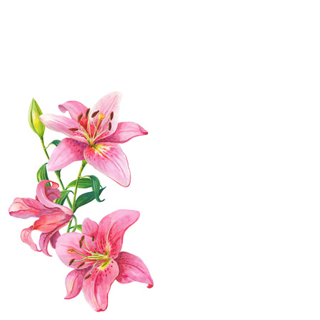 Pink lilies.Floral Watercolor flowers wreath