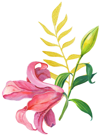 Pink lilies.Floral Illustration Stock Photo