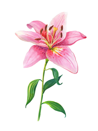 Pink lilies.Floral IllustrationWatercolor flowers on a white background..Design element for scrapbooking, Invitations,greeting card,books and journals, decoupage,weddings, birthdays Stock Photo