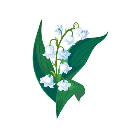 Maiglöckchen - Maiglocken, Convallaria majalis mit grünen Blättern auf weißem Hintergrund. Frühlingsblume. Handgezeichnete realistische Vektorillustration.