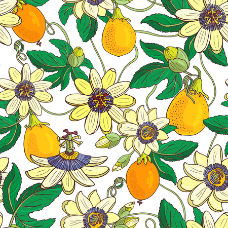 Passiflore passiflore, fruit de la passion sur fond blanc. Motif floral sans couture avec de grandes fleurs exotiques lumineuses, bourgeons et feuilles. Illustration vectorielle d'été pour textile imprimé, tissu, papier d'emballage.