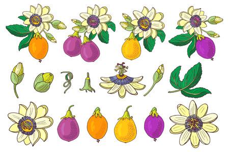 Ensemble de passiflore (passiflore, violet, violet, fruit tropical jaune) sur fond blanc. Fleur exotique isolée, bourgeon et feuille. Illustration vectorielle d'été pour textile imprimé, tissu, papier d'emballage. Vecteurs